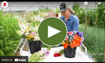 View Our Overwinter Flower Trial Recap Video