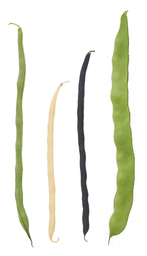 Pole beans in a range of colors, flavors & shapes