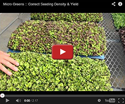 Seeding Your Micro Greens