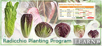 Johnny's Radicchio Planting Program