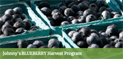Blueberry Harvest Program