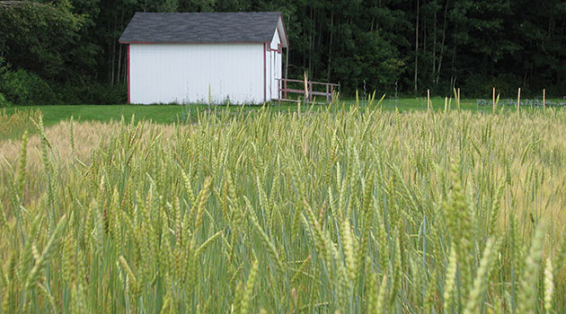 Growing Information for Farm Seed & Cover Crops
