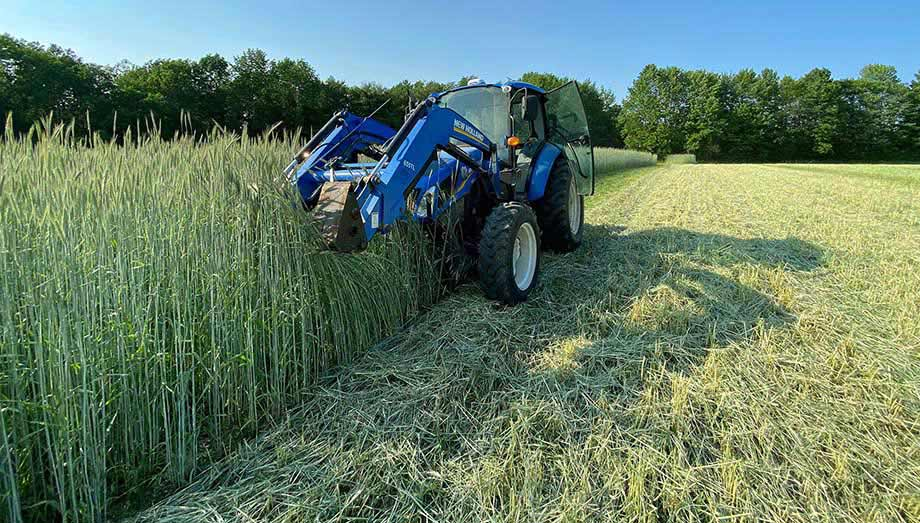 Mowing down the organic winter rye, Johnny's trialing fields, June 2021