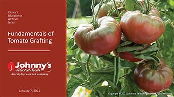 Fundamentals of Tomato Grafting Recap - 15-pp PDF