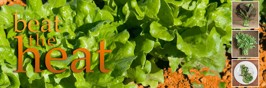 Lettuce & Greens for Southern Growers