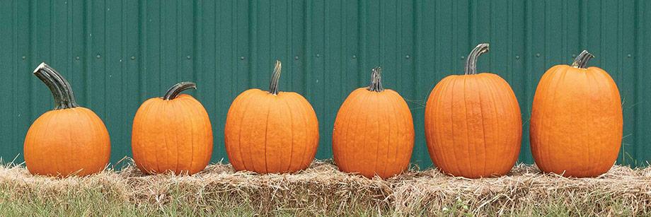 Registration • Top-Performing Pumpkins Webinar