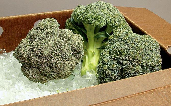 Summer-Harvest Broccoli on Ice