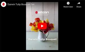 Darwin Hybrid Tulip Set