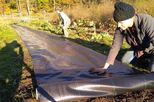 Laying landscape fabric at Stars of the Meadow
