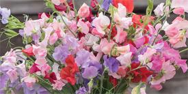 Mason Jar Bouquet Set