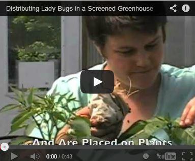 Distributing Ladybugs