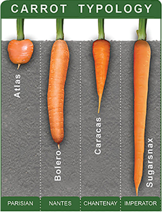 Carrot Typology Chart