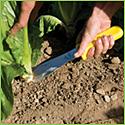 Lettuce Field Knife