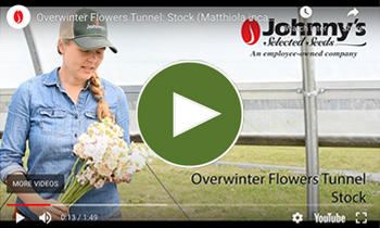 View Our Late-Winter/Spring-Seeded Flower Tunnel Stock Video
