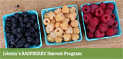 Raspberry Harvest Program