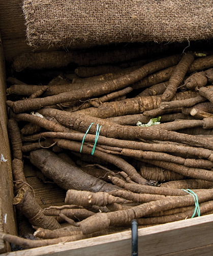 This box of bundled burdock roots will keep in storage for several months.