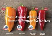 AAS Winners - Corno di Toro Peppers