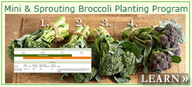 Sprouting & Mini Broccoli Planting Program
