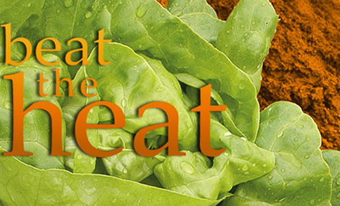 Beat the Heat • Success for Southern Growers with Lettuce & Greens