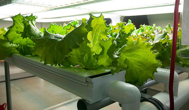 Introduction to Hydroponics -  Lettuce Trial