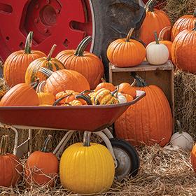 Bulk Pumpkin Seed