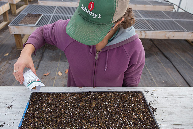 Seeding the Microgreens Yield Data Trial in our trial greenhouse.