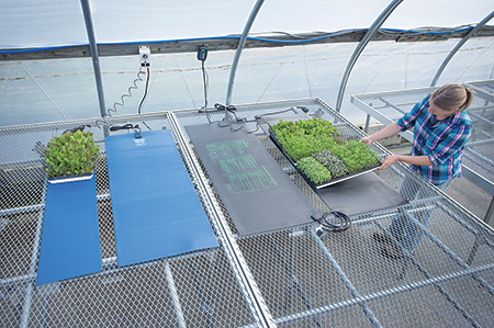 Seedling heat mats provide greater control over soil temperature, hence germination success.