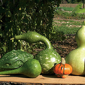 How to Grow Ornamental Gourds