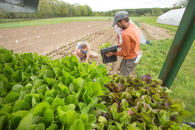 Lettuce for Every Grower - How to Choose & Grow