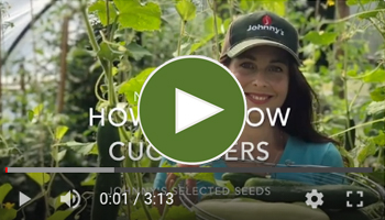 View Our How to Grow Cucumbers Video