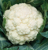 Amazing Cauliflower