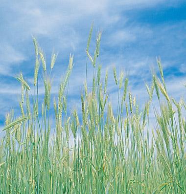 Biomass/Organic Matter