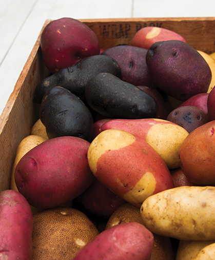 Box of potatoes, including russets, specialty, fingerling, heirloom, red- and blue-skinned varieties.