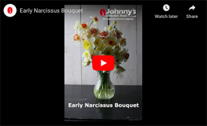 Early Narcissus Set