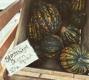 Starry Night powdery mildew resistant acorn squash