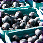 Reap Maximal Return on Protected Blueberries