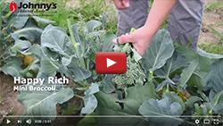 Happy Rich Mini Broccoli