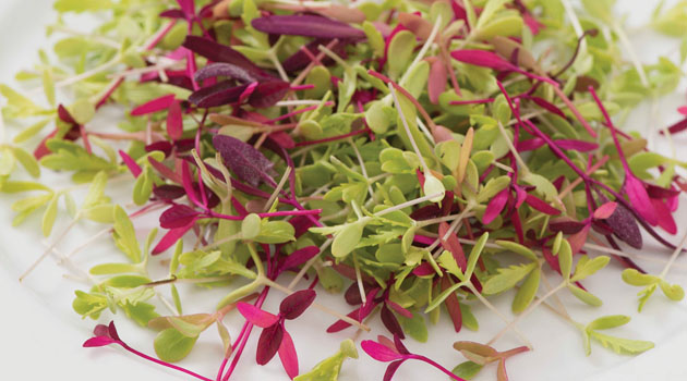 7 Best Microgreens for Beginners