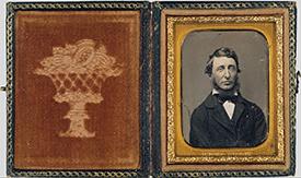Thoreau's Bean Row: I came to love my rows, my beans...