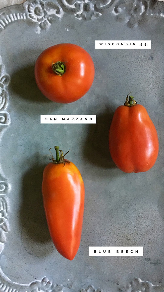 3 Johnny's Open-Pollinated Tomatoes. Photo courtesy Finch & Folly