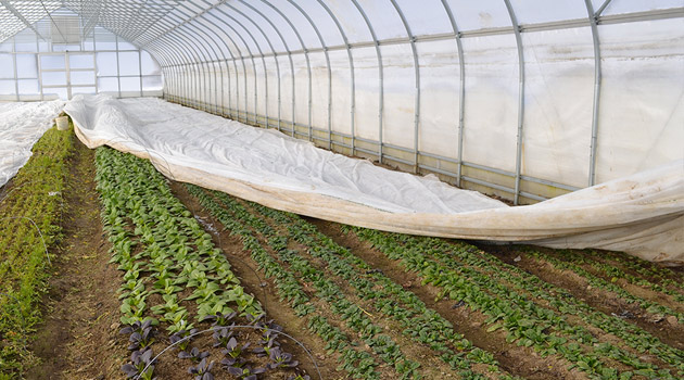 Winter Production in the High Tunnel