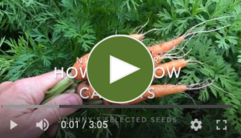 View Our How to Grow Carrots Video