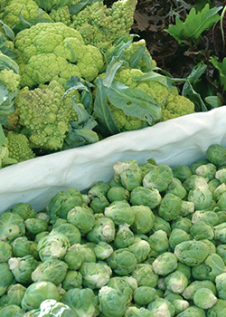 Brussels Sprouts at Farmer's Market