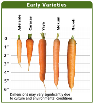 Early Carrots Comparison Chart