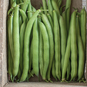 How to Grow Bush Beans (Green Beans)