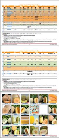 Comparison Chart: Cucumis melo (non-watermelon) varieties