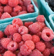 Killarney Raspberry Plants