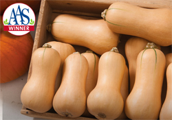 AAS Winner Butterscotch Butternut Squash