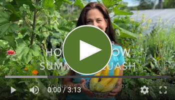 View Our How to Grow Summer Squash Video