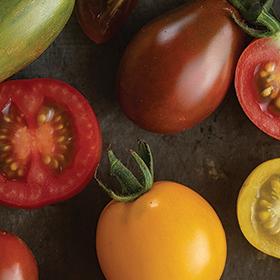 Bulk Tomato Seed